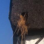 Straw Thatch Repair
