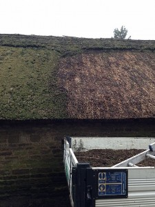 thatched roof moss removal