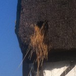 Straw Thatch Repair