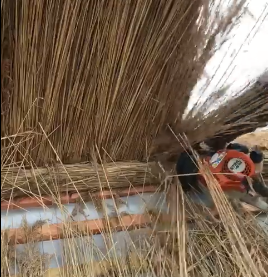 Live at Work on a Thatching Job (VIDEO)