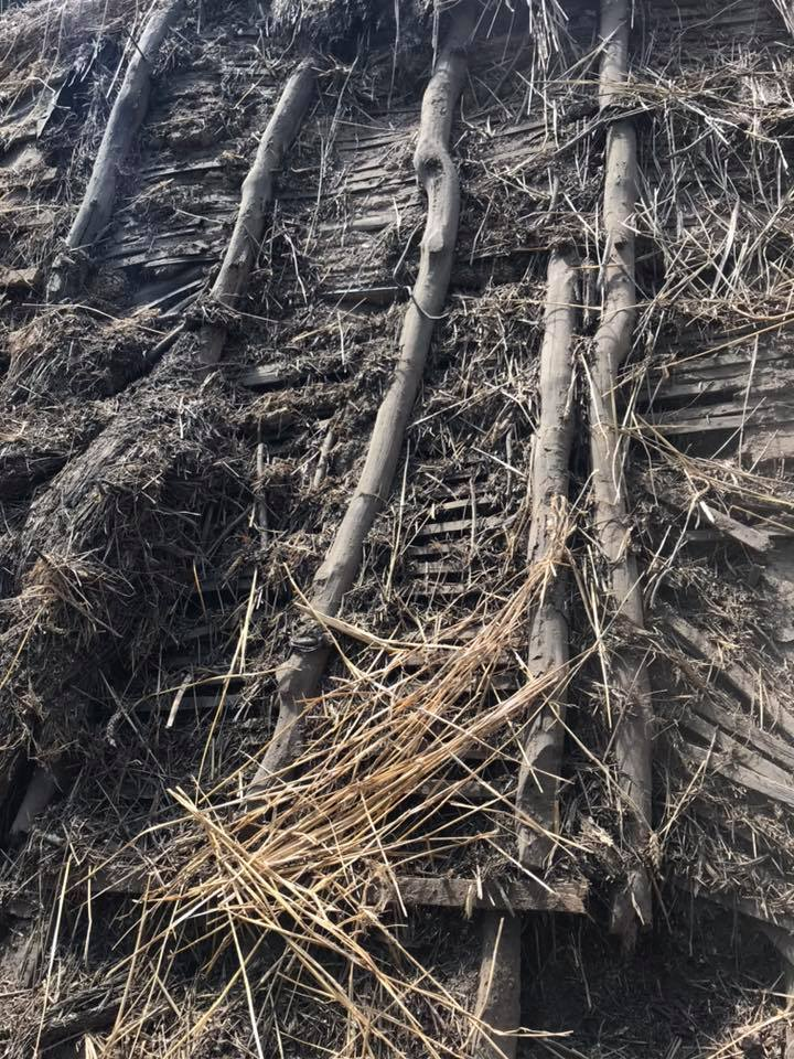 The Importance Of Thatch Maintenance